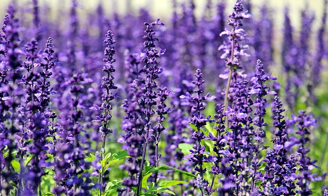 Flowers for Healing | Lavender