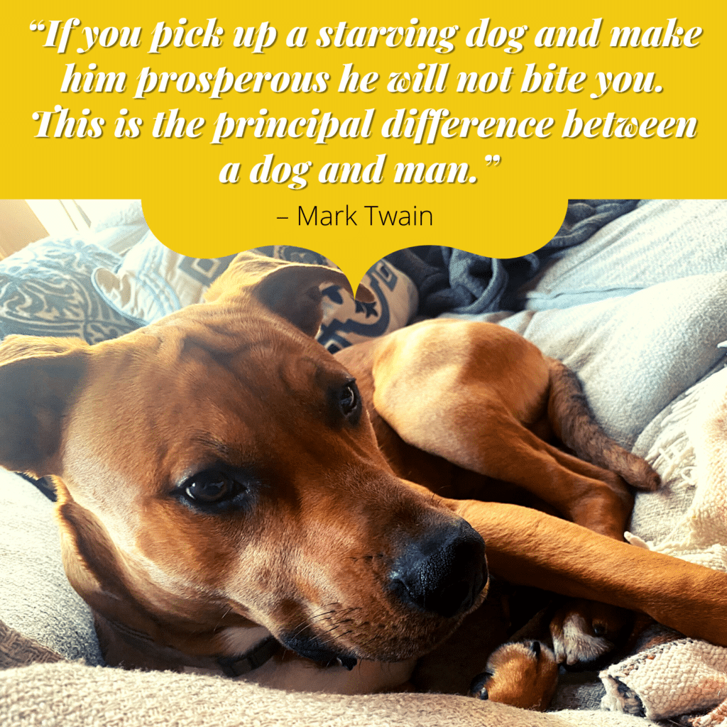 """""""If you pick up a starving dog and make him prosperous he will not bite you. This is the principal difference between a dog and man."""" – Mark Twain"""